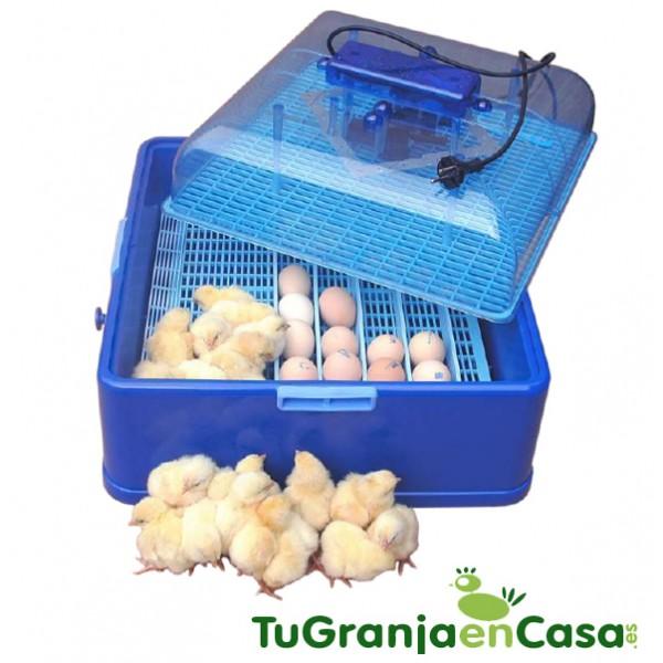 incubadora 1