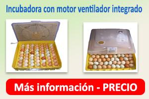 incubadora2